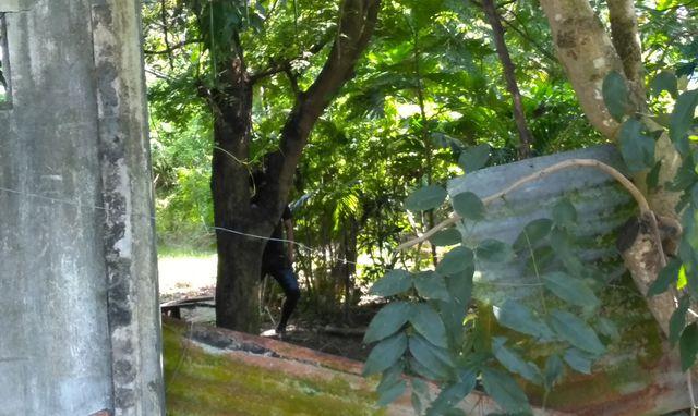 Đi chăn trâu, tá hỏa phát hiện thi thể treo trên cây đang phân hủy nặng - Ảnh 1