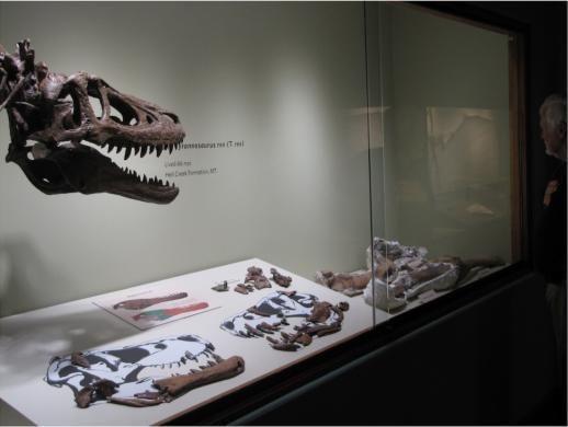 Hóa thạch khủng long độc nhất thế giới được rao bán với giá gần 70 tỷ đồng - Ảnh 2