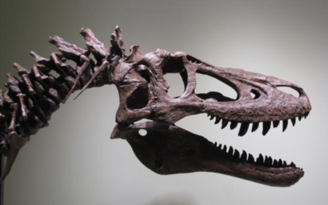 Hóa thạch khủng long độc nhất thế giới được rao bán với giá gần 70 tỷ đồng - Ảnh 1