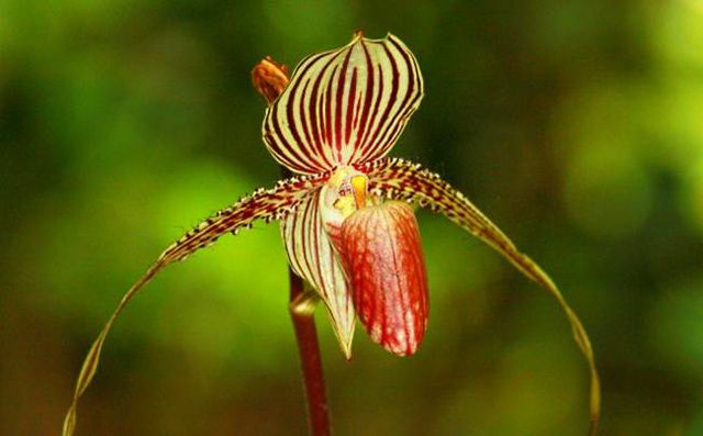Loài hoa lan kì lạ 15 năm mới nở một lần, đại gia muốn mua cũng khó - Ảnh 4