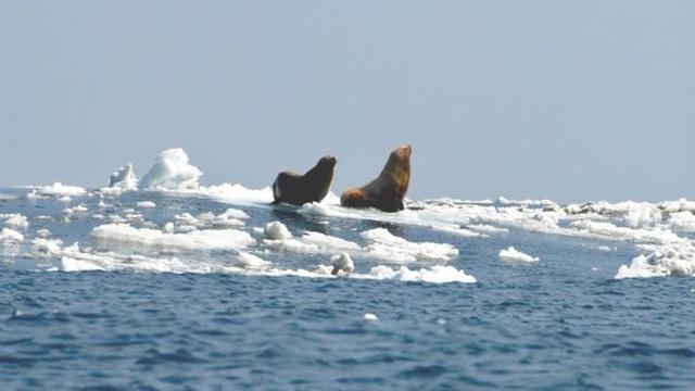Sông băng 15.000 năm tuổi tan có thể gây nguy cơ giải phóng 33 nhóm virus cổ xưa bị mắc kẹt - Ảnh 1
