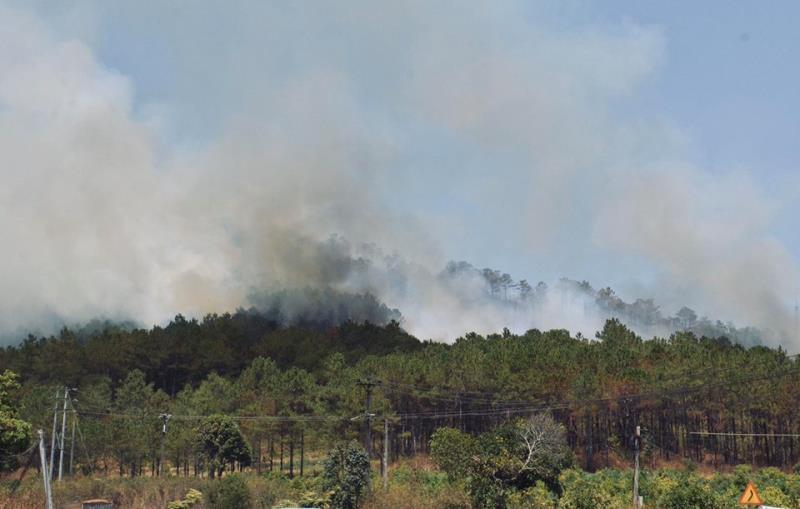 Hơn 2ha rừng phòng hộ ở Gia Lai bốc cháy ngùn ngụt - Ảnh 1