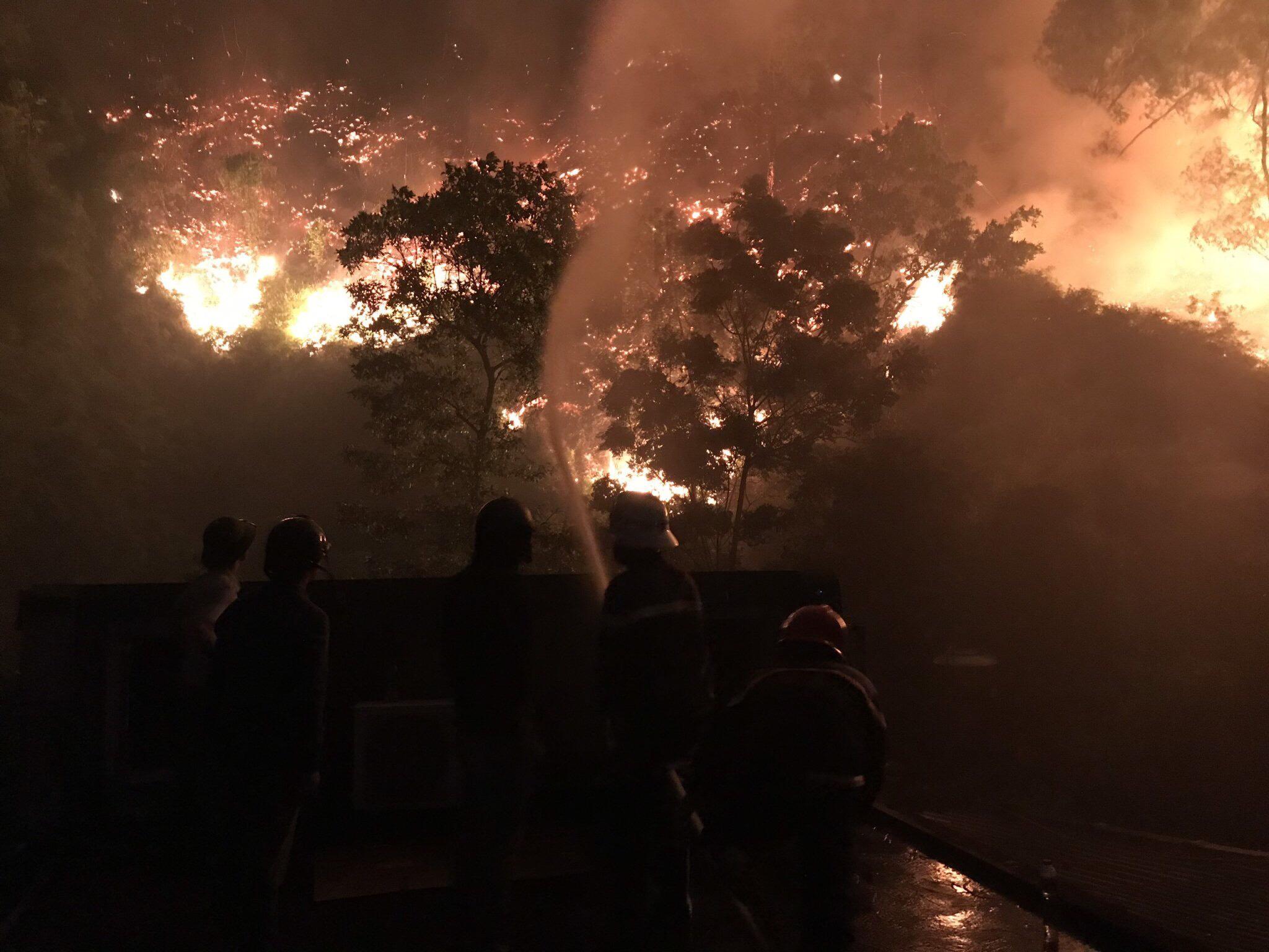 Đốt thực bì gây cháy rừng, lão nông ở Hà Tĩnh bị phạt 90 triệu đồng và buộc phải trồng lại rừng - Ảnh 1
