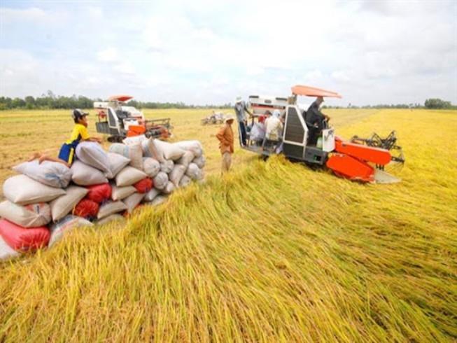 Vĩnh Long phê duyệt đề án xây dựng bảo tàng nông nghiệp 400 tỷ đồng - Ảnh 1