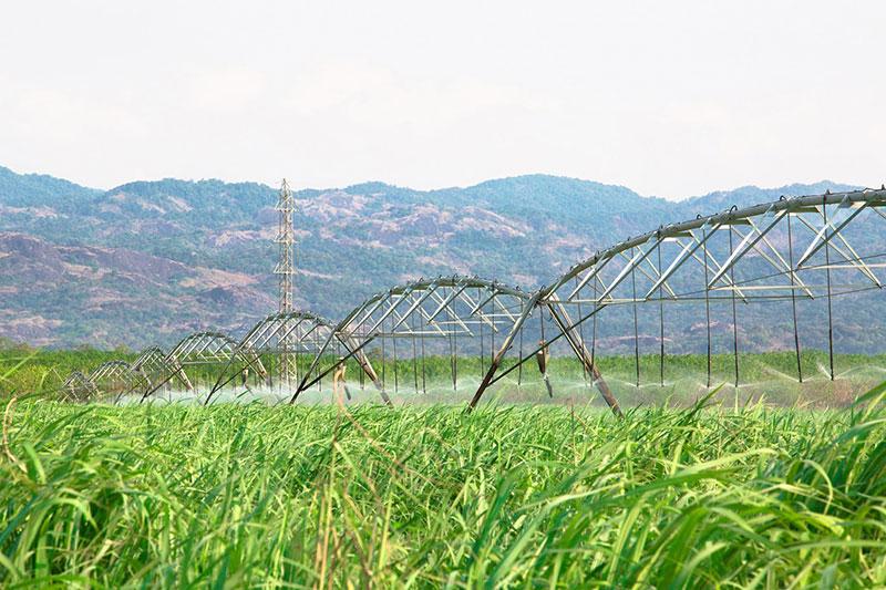 Thành Thành Công - Biên Hòa phát hành 172 tỷ đồng trái phiếu kỳ hạn 3 năm - Ảnh 1
