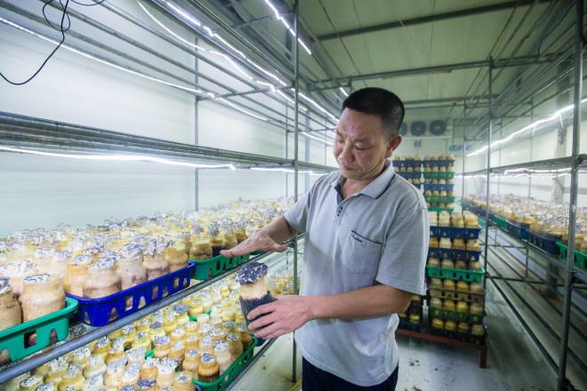 Làm nấm, ấm thân - anh nông dân thu về 35 tỷ đồng/năm - Ảnh 1