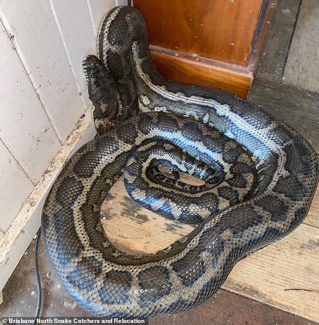 """Vừa bước vào nhà đã phát hiện trần vỡ tung tóe, chủ nhà thất kinh phát hiện 2 """"khách không mời"""" đáng sợ - Ảnh 2"""