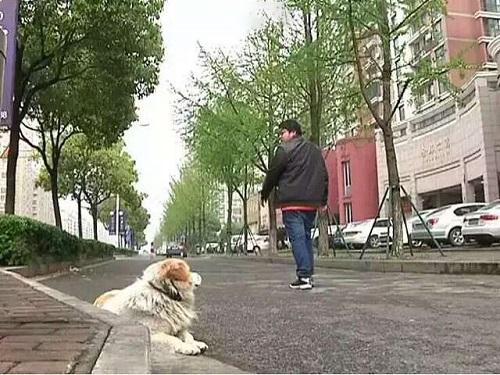 Bị bỏ rơi 7 ngày, chú chó nhỏ vẫn trung thành đợi chủ nhân quay về  - Ảnh 3