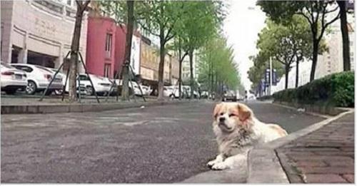 Bị bỏ rơi 7 ngày, chú chó nhỏ vẫn trung thành đợi chủ nhân quay về  - Ảnh 1