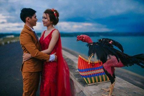 """Hài hước bộ ảnh cưới """"Em một bên và gà một bên"""" của cặp đôi Phú Yên - Ảnh 1"""