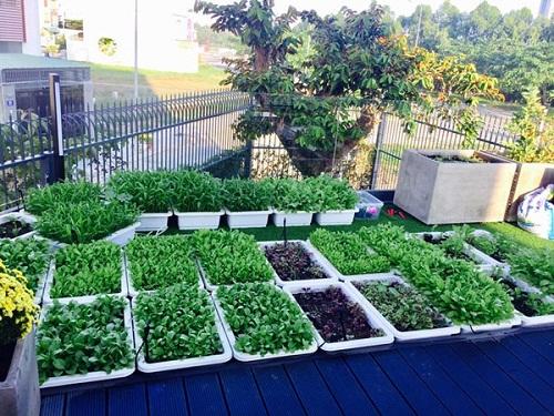 Ngắm vườn rau sạch trong biệt thự triệu đô của các sao Việt - Ảnh 1