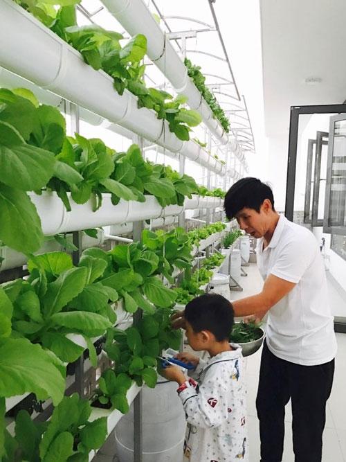Ngắm vườn rau sạch trong biệt thự triệu đô của các sao Việt - Ảnh 3