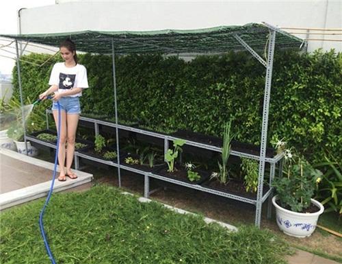 Ngắm vườn rau sạch trong biệt thự triệu đô của các sao Việt - Ảnh 11