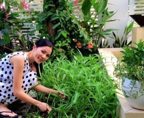 Ngắm vườn rau sạch trong biệt thự triệu đô của các sao Việt - Ảnh 7
