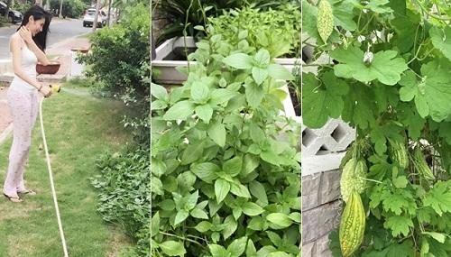 Ngắm vườn rau sạch trong biệt thự triệu đô của các sao Việt - Ảnh 5