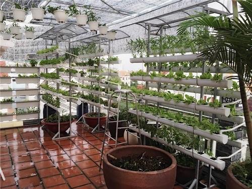 Ngắm vườn rau sạch trong biệt thự triệu đô của các sao Việt - Ảnh 12