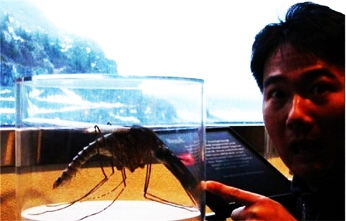 """Thế giới tự nhiên rộng lớn và những """"sinh vật đột biến"""" có kích thước khủng trên thế giới - Ảnh 1"""