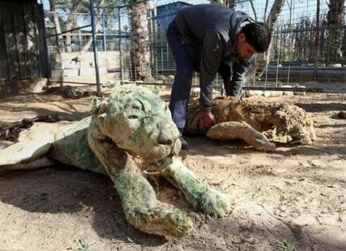 Vườn thú tàn khốc bỏ đói các con thú 90 ngày, chúa sơn lâm cũng biến thành xác khô - Ảnh 1