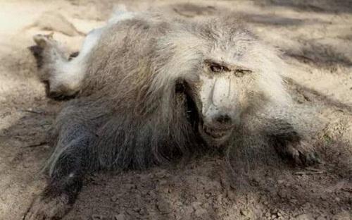 Vườn thú tàn khốc bỏ đói các con thú 90 ngày, chúa sơn lâm cũng biến thành xác khô - Ảnh 2