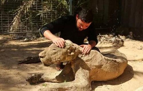 Vườn thú tàn khốc bỏ đói các con thú 90 ngày, chúa sơn lâm cũng biến thành xác khô - Ảnh 5