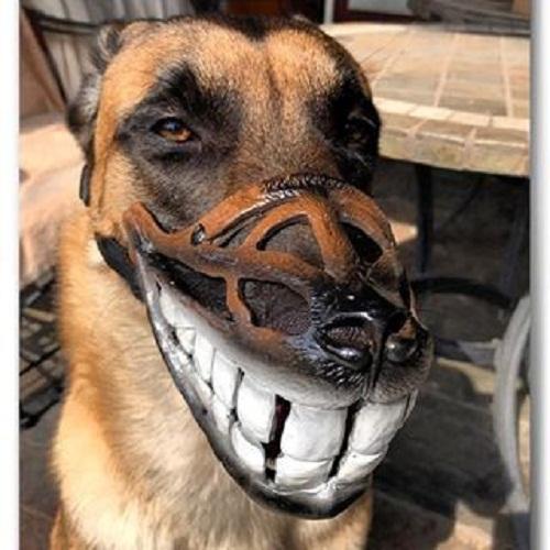 """""""Chết cười"""" với những kiểu rọ mõm chó độc đáo có """"1-0-2"""" - Ảnh 1"""