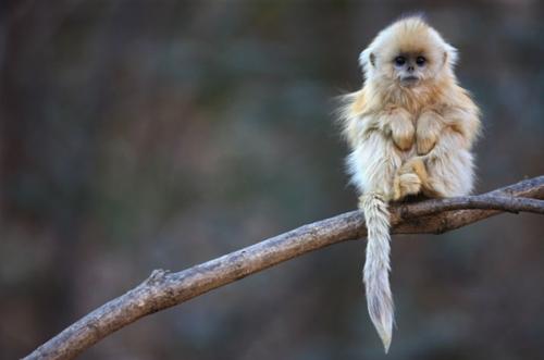Thế giới tự nhiên kỳ thú và những loài động vật khiến bạn khó tin chúng có thật trên đời - Ảnh 2