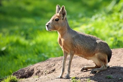 Thế giới tự nhiên kỳ thú và những loài động vật khiến bạn khó tin chúng có thật trên đời - Ảnh 4