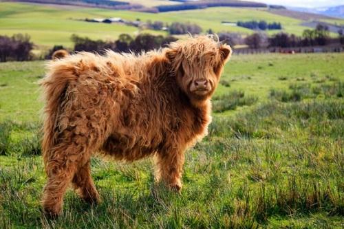 Thế giới tự nhiên kỳ thú và những loài động vật khiến bạn khó tin chúng có thật trên đời - Ảnh 5