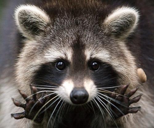 Thế giới tự nhiên kỳ thú và những loài động vật khiến bạn khó tin chúng có thật trên đời - Ảnh 6