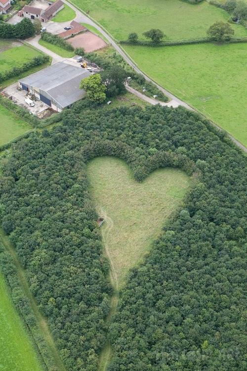 Người đàn ông trồng 6.000 cây để tưởng nhớ vợ, 17 năm sau bí mật lớn được phát hiện - Ảnh 2