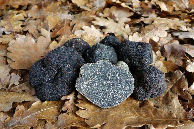 """Loại nấm được ví như """"kim cương đen"""": Mỹ vị của giới thượng lưu - Ảnh 7"""