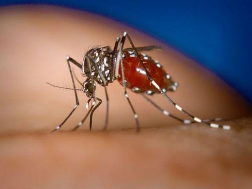 Bác sĩ khuyên những điều cần nhớ khi bị sốt xuất huyết - Ảnh 1