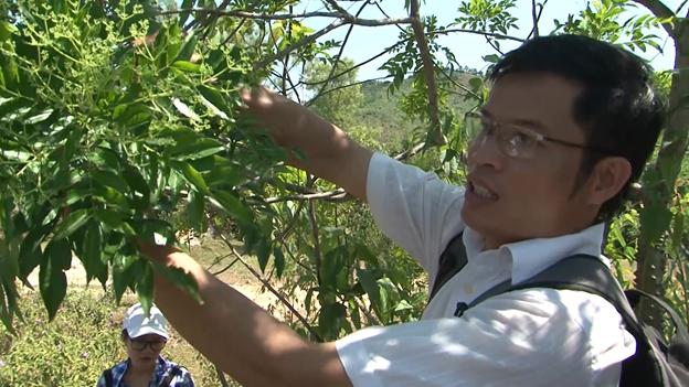 Ước vọng từ tiến sĩ Dược học để người Việt có lá gan khỏe mạnh - Ảnh 1