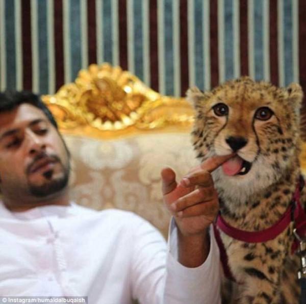 Những sự đối lập không phải ai cũng biết về Dubai - Ảnh 4