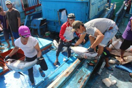 Cá ngừ đại dương mất mùa ngư dân thu lỗ trầm trọng  - Ảnh 2