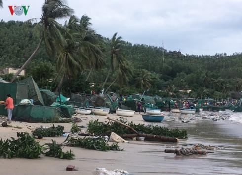 Sau bão số 12, người dân nuôi tôm hùm thiệt hại tiền tỷ vì mất trắng - Ảnh 1