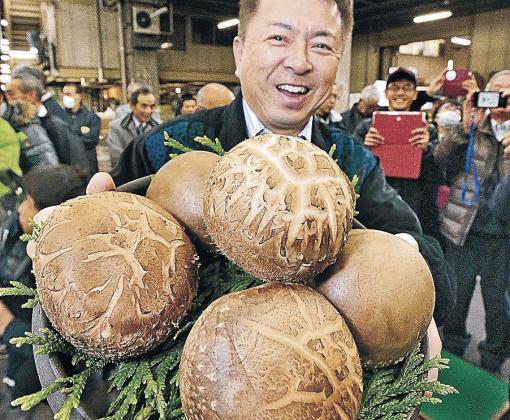 6 cái nấm hương có giá 35 triệu đồng có gì đặc biệt? - Ảnh 1