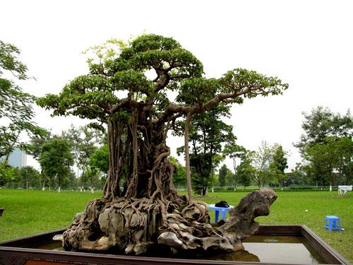 Chiêm ngưỡng những cây cảnh có giá đắt hơn cả căn biệt thự - Ảnh 3