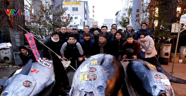 Đấu giá cá ngừ vây xanh Thái Bình Dương khồng lồ 405kg - Ảnh 1