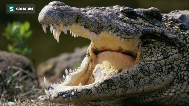 Video: Cá sấu mẹ hung hãn tấn công nhau vì hiểu lầm - Ảnh 1