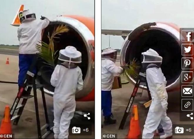 """Video: 20.000 con ong """"đổ bộ"""" khiến 3 chuyến bay không thể cất cánh  - Ảnh 1"""