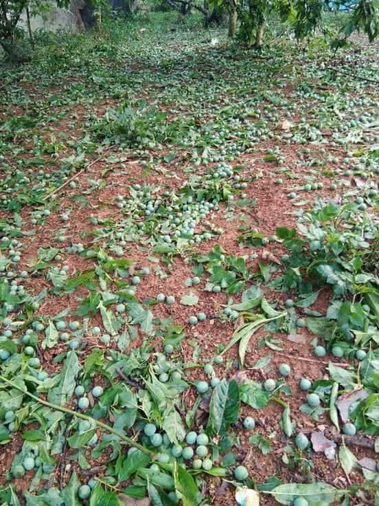 Gió lốc kèm mưa đá tàn phá nhiều nhà cửa ở Sơn La, Bắc Kạn - Ảnh 3