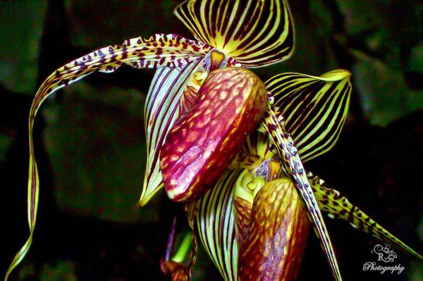 """""""Choáng váng"""" với giá tiền của 6 loài hoa đắt nhất thế giới  - Ảnh 4"""