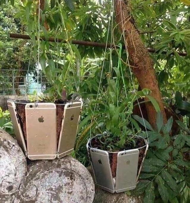 Sốc với độ chịu chơi của con nhà giàu, dùng iPhone làm chậu trồng cây  - Ảnh 1