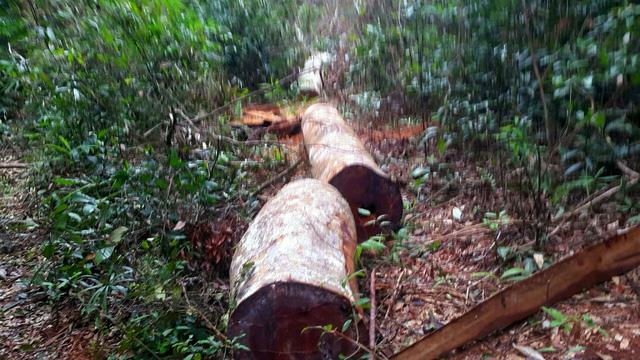 """Gia Lai: Kỷ luật 5 cán bộ vì để """"mất rừng"""" tại Kbang - Ảnh 1"""