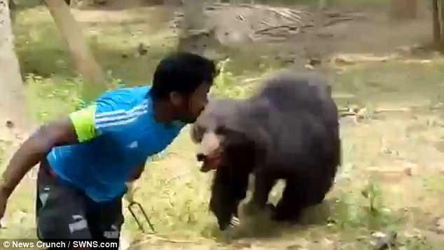 Video: Hãi hùng khi gấu tấn công vào làng, khiến nhiều người thương vong  - Ảnh 1