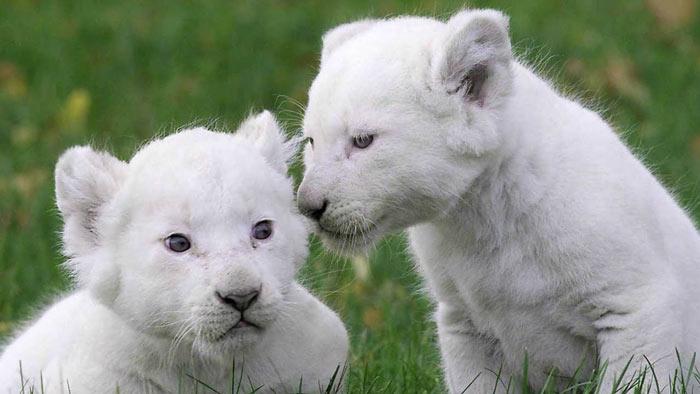 Chiêm ngưỡng những con vật đắt nhất thế giới - Ảnh 6