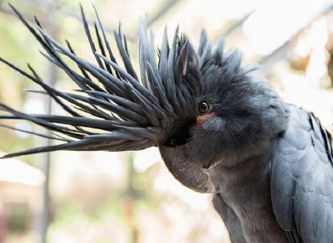 Chiêm ngưỡng những con vật đắt nhất thế giới - Ảnh 5