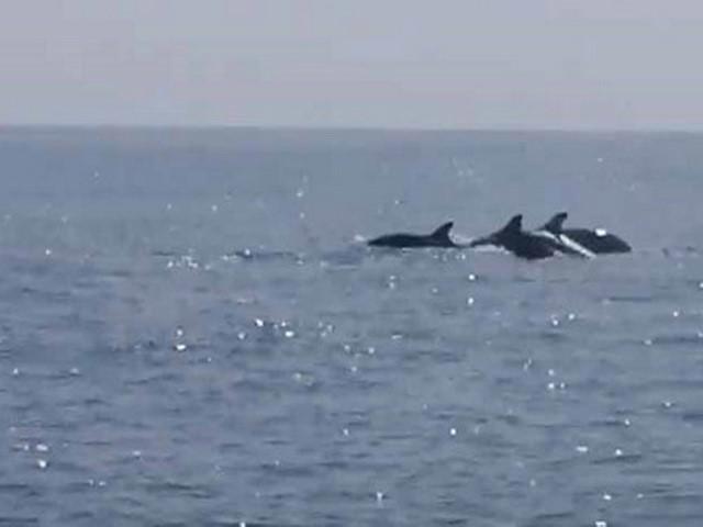 Ly kỳ chuyện về đàn cá heo cứu 41 ngư dân bị lật thuyền giữa biển khơi - Ảnh 1