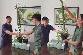 Đại gia Hà Tĩnh bất ngờ tiết lộ sau khi mua 2 chậu lan 3,5 tỷ đồng - Ảnh 1